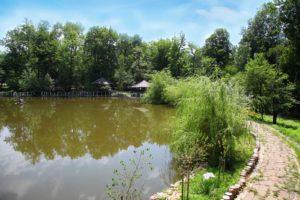 зарыбленный пруд Архипо-Осиповка