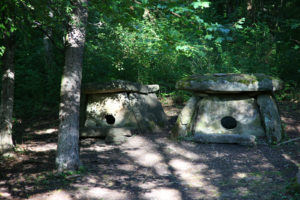 лесные прогулки Архипо-Осиповка